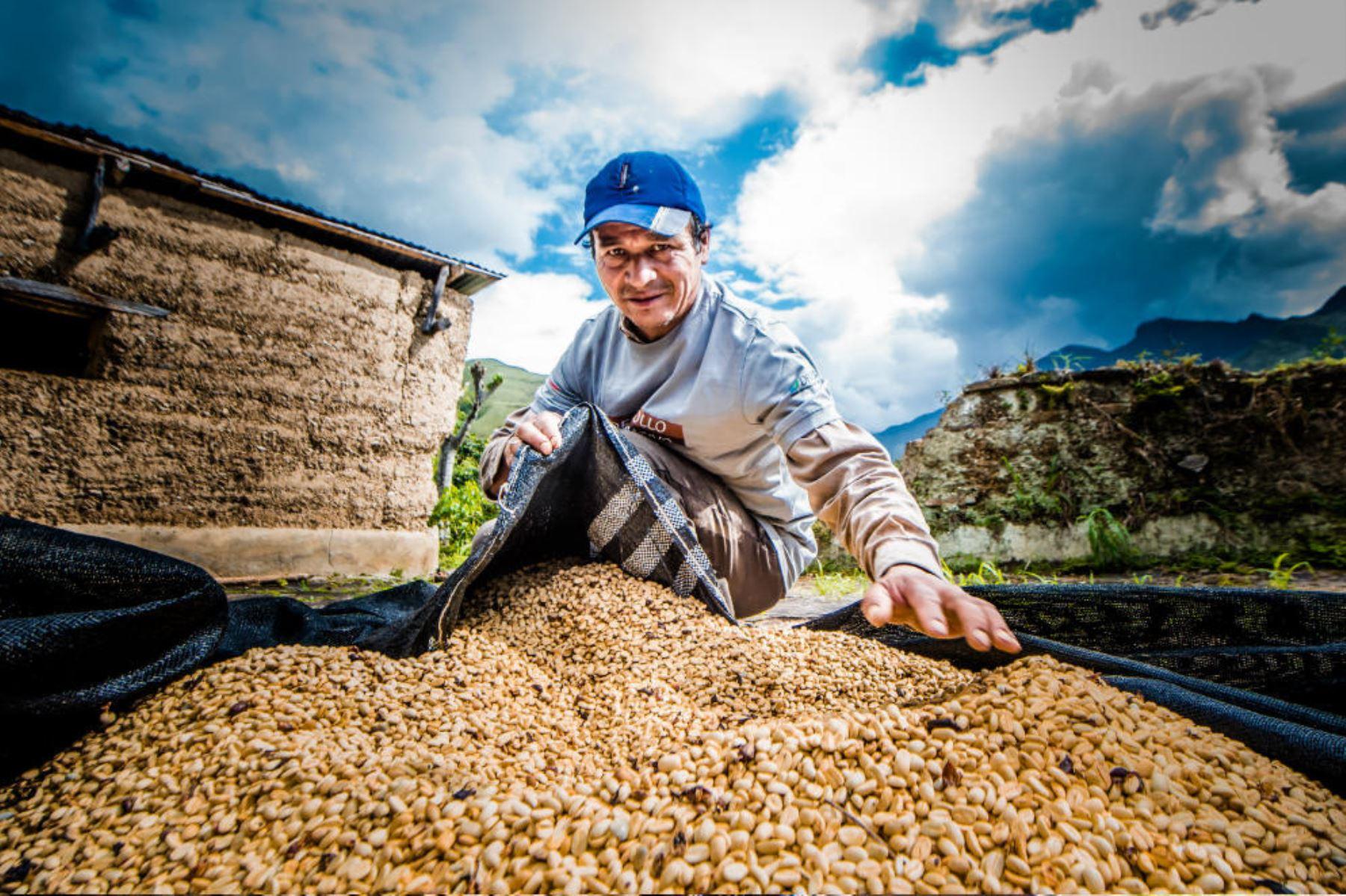 El café del valle del Monzón, región Huánuco, será saboreado por exigentes paladares de Europa. Foto: Devida