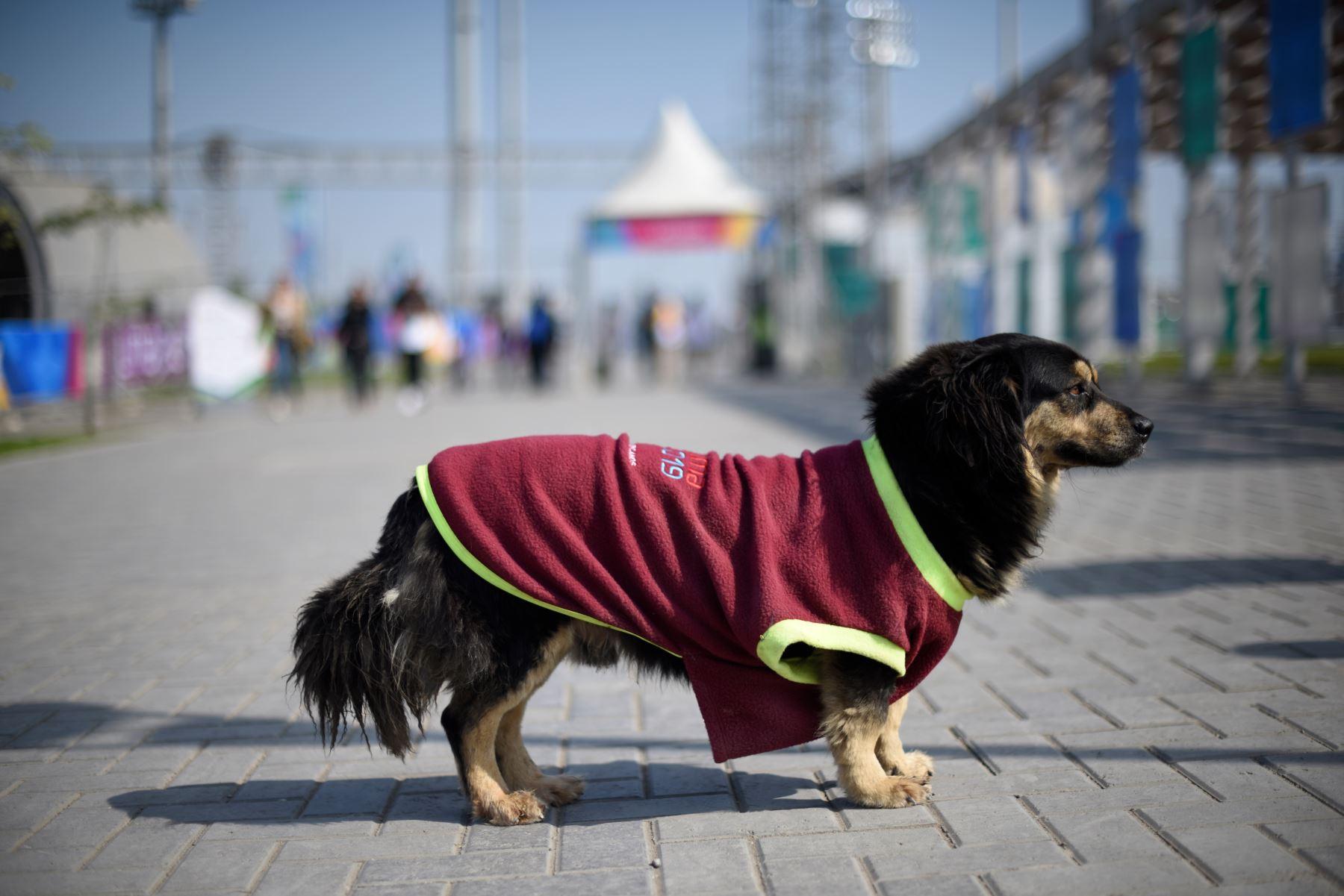 """""""Triunfo"""", perrito de la calle adoptado por los voluntarios del Complejo Deportivo Villa María del Triunfo.   Foto: ANDINA/ Lima 2019"""
