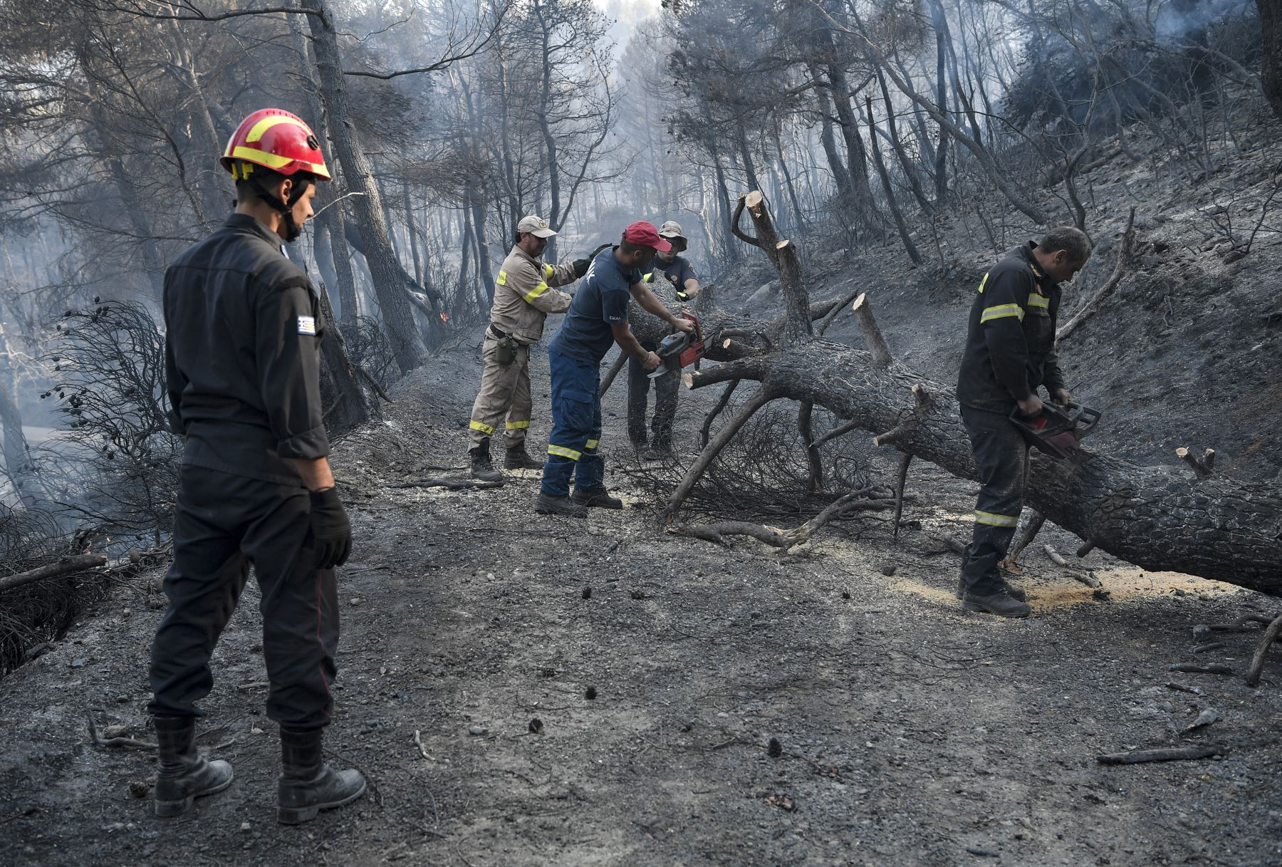 Cientos de bomberos luchan contra los incendios forestales en Grecia, atravesando una boscosa reserva natural en la isla de Evia, al norte de Atenas. Foto: AFP