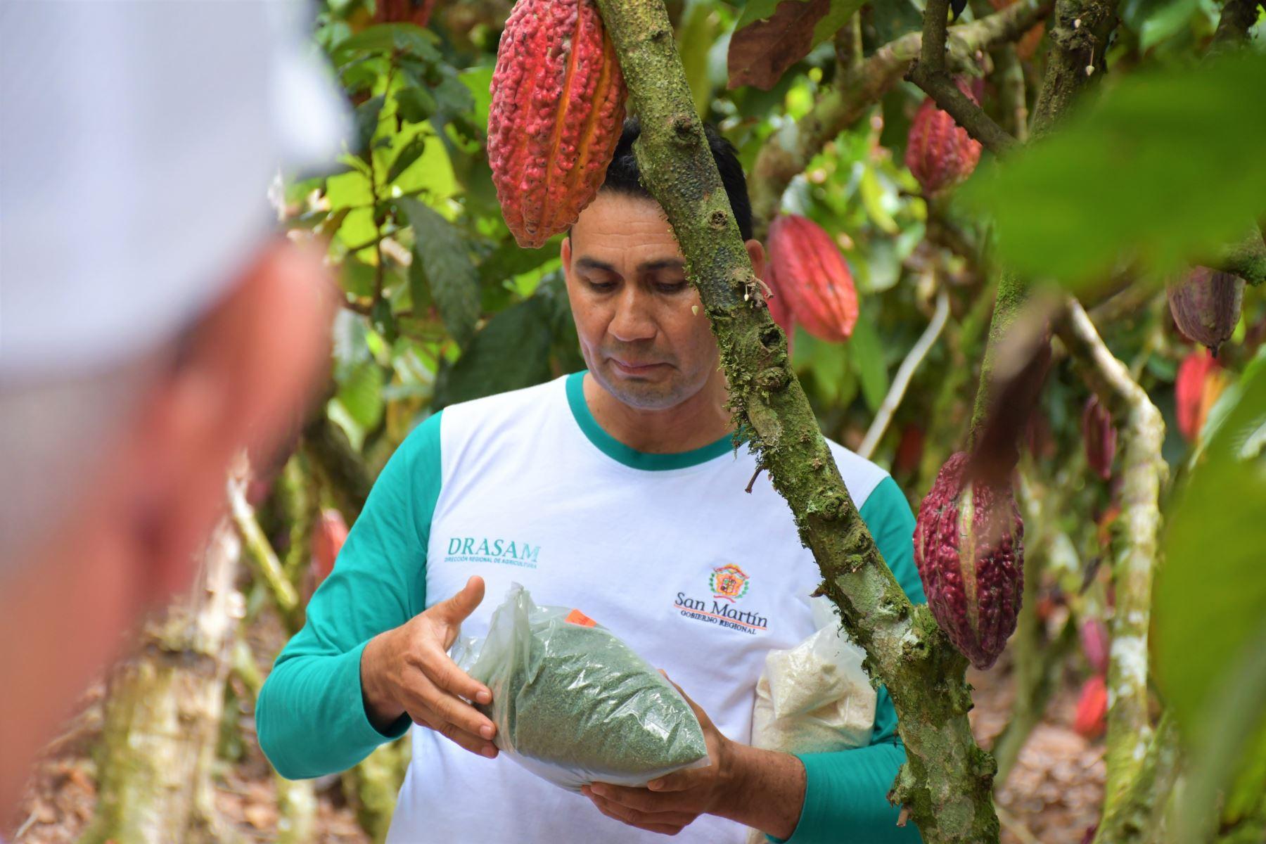 Investigación científica en San Martín logra reducir presencia de cadmio en plantas de cacao. ANDINA/Difusión