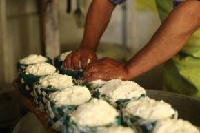 Productores de Lluta (Arequipa) reciben asistencia técnica para mejorar la producción de queso.