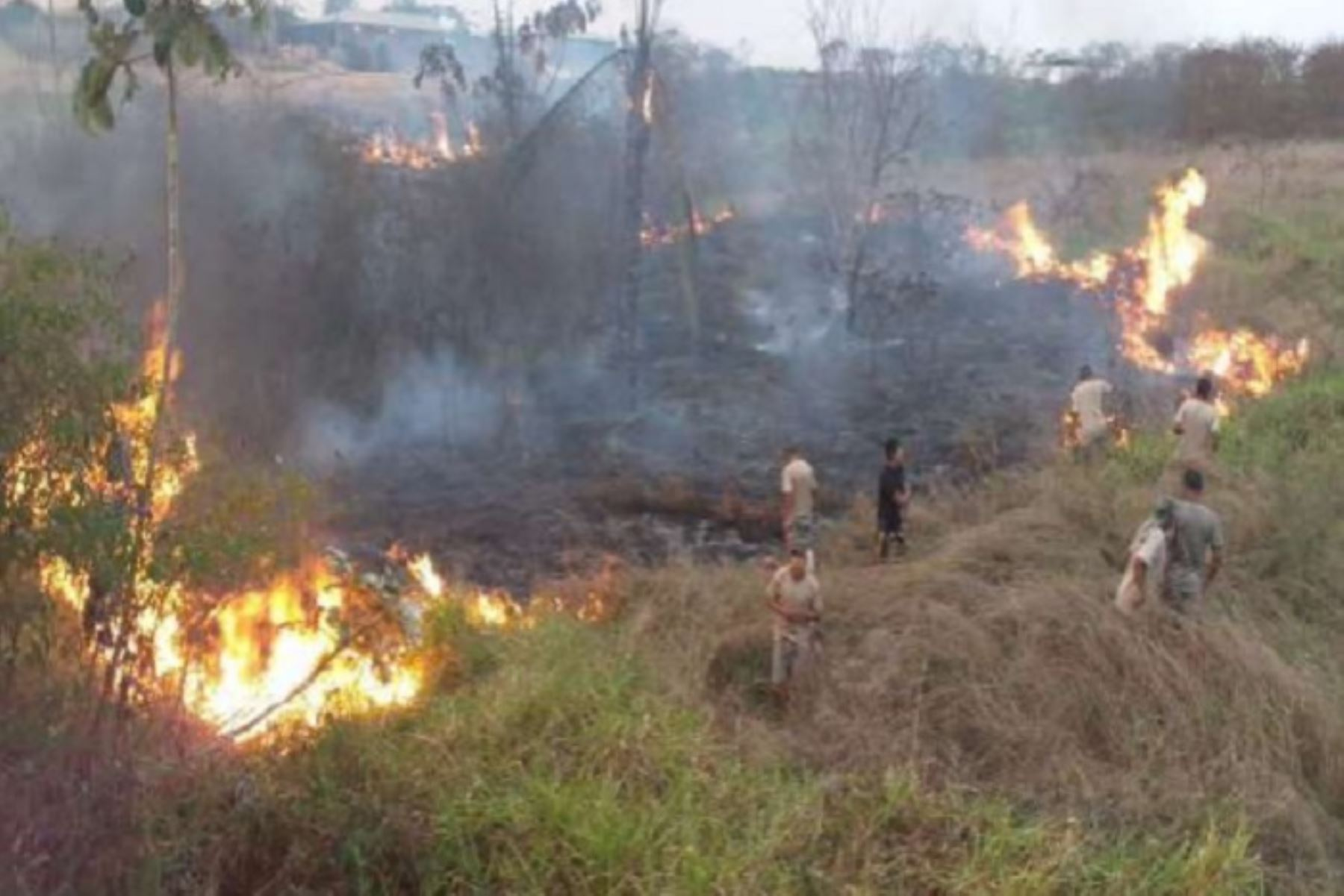 El Gobierno Regional de Madre de Dios evalúa solicitar que se declare en emergencia la provincia de Tahuamanu, donde se genera la mayoría de incendios forestales, a fin de contar con el equipamiento adecuado para los bomberos e infraestructura, precisó el gobernador regional, Luis Hidalgo.ANDINA/Difusión