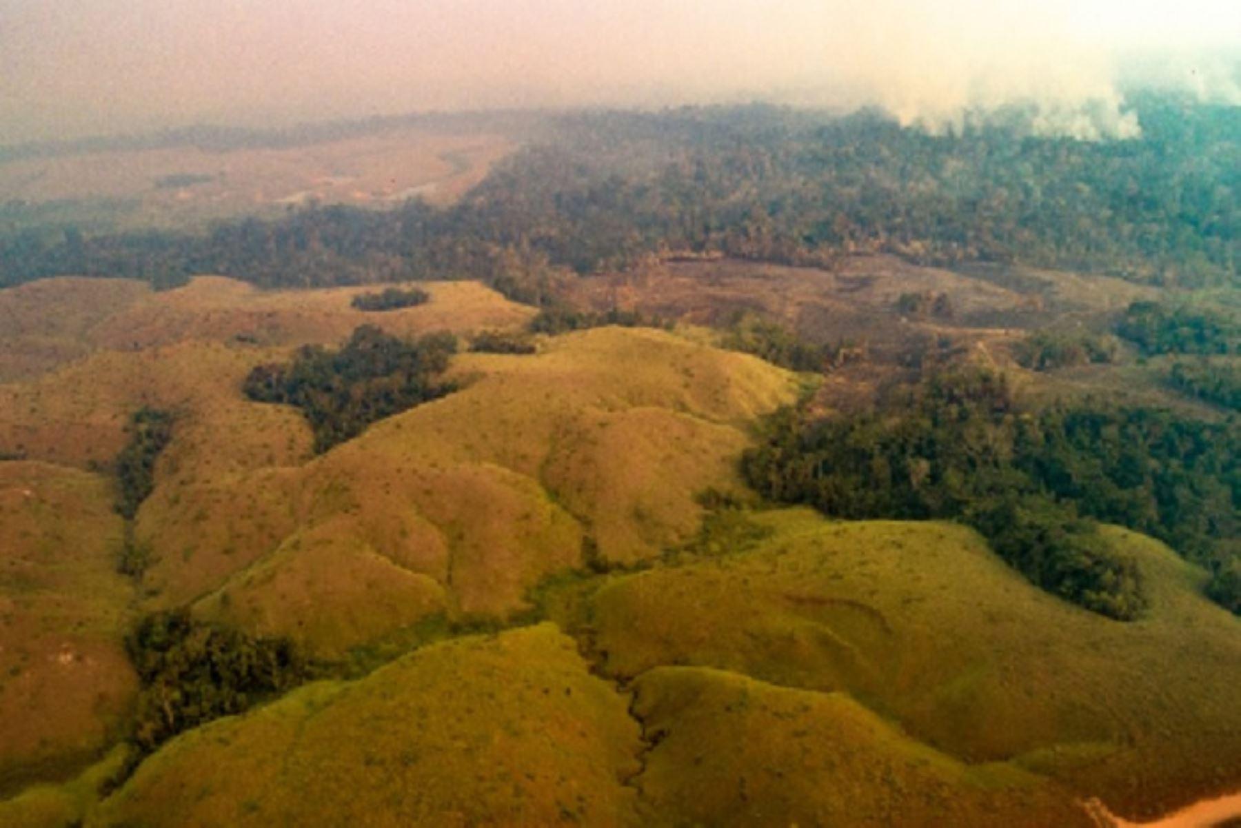 Piden declarar en emergencia la provincia de Tahuamanu — Incendio forestal