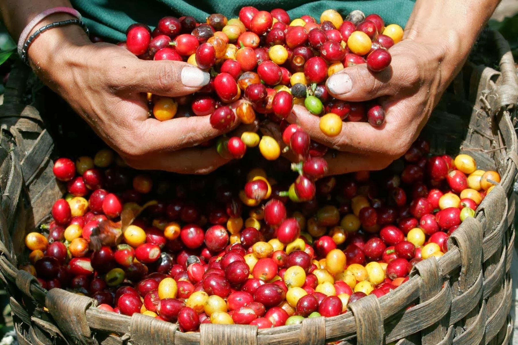 Inacal impulsa cadena de valor del café peruano con 27 normas técnicas