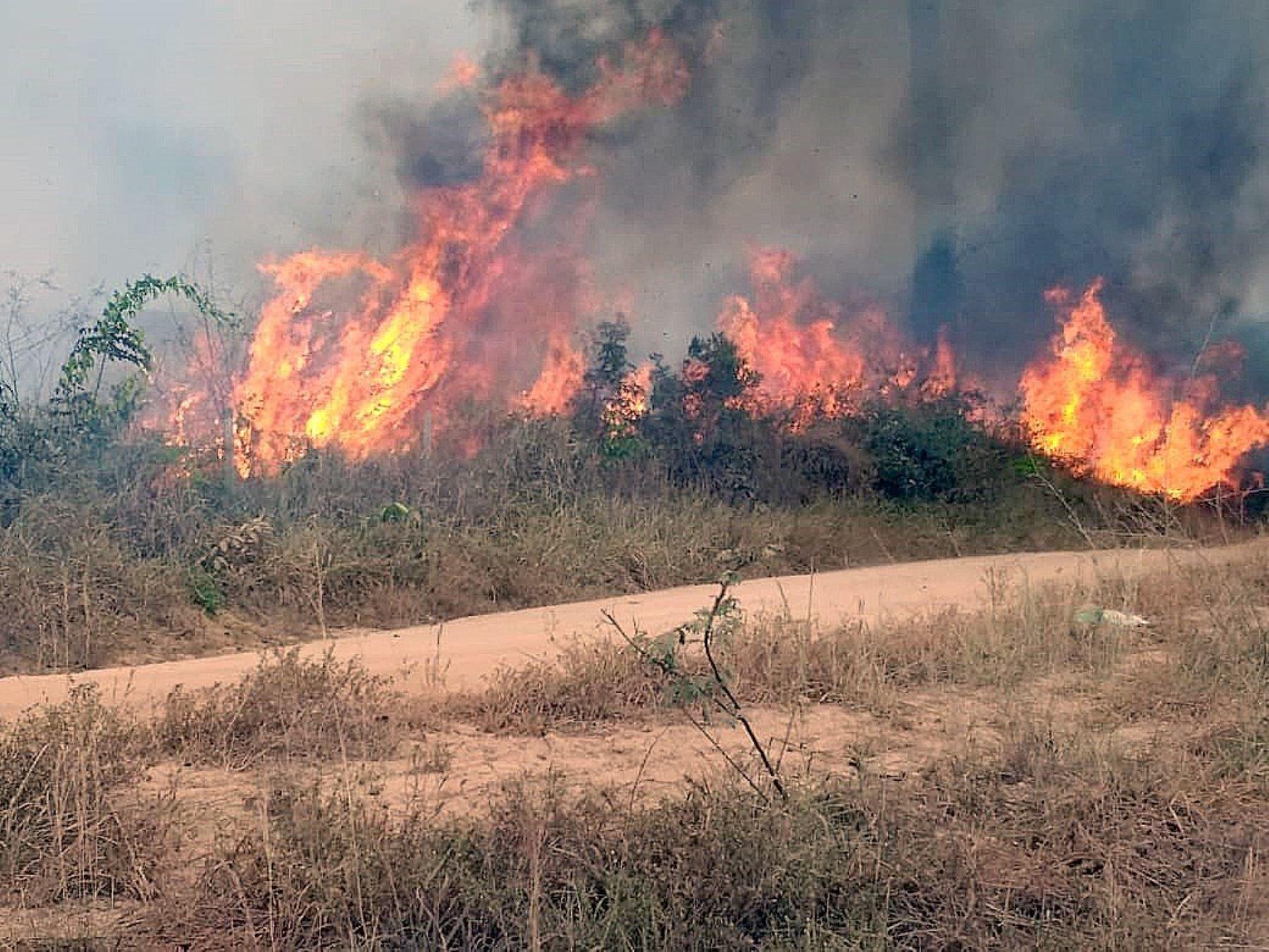 Fotografía del 21 de agosto de 2019, cedida por la Brigada Municipal que muestra uno de los incendios que azotan la amazonía brasileña, en Porto Velho, capital del estado amazónico de Rondonia (Brasil). EFE