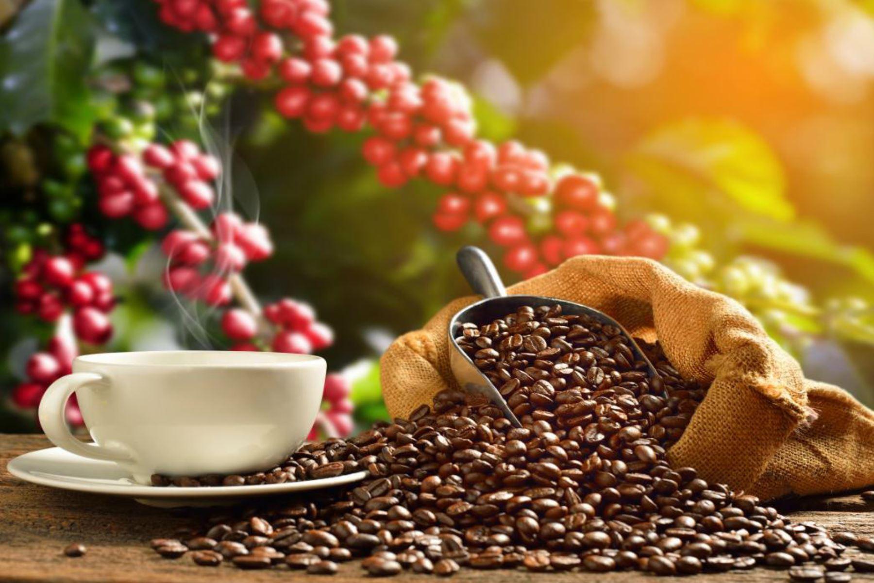 Día del Café peruano: conoce cómo se cultiva y procesa el café de alta calidad. ANDINA/Difusión