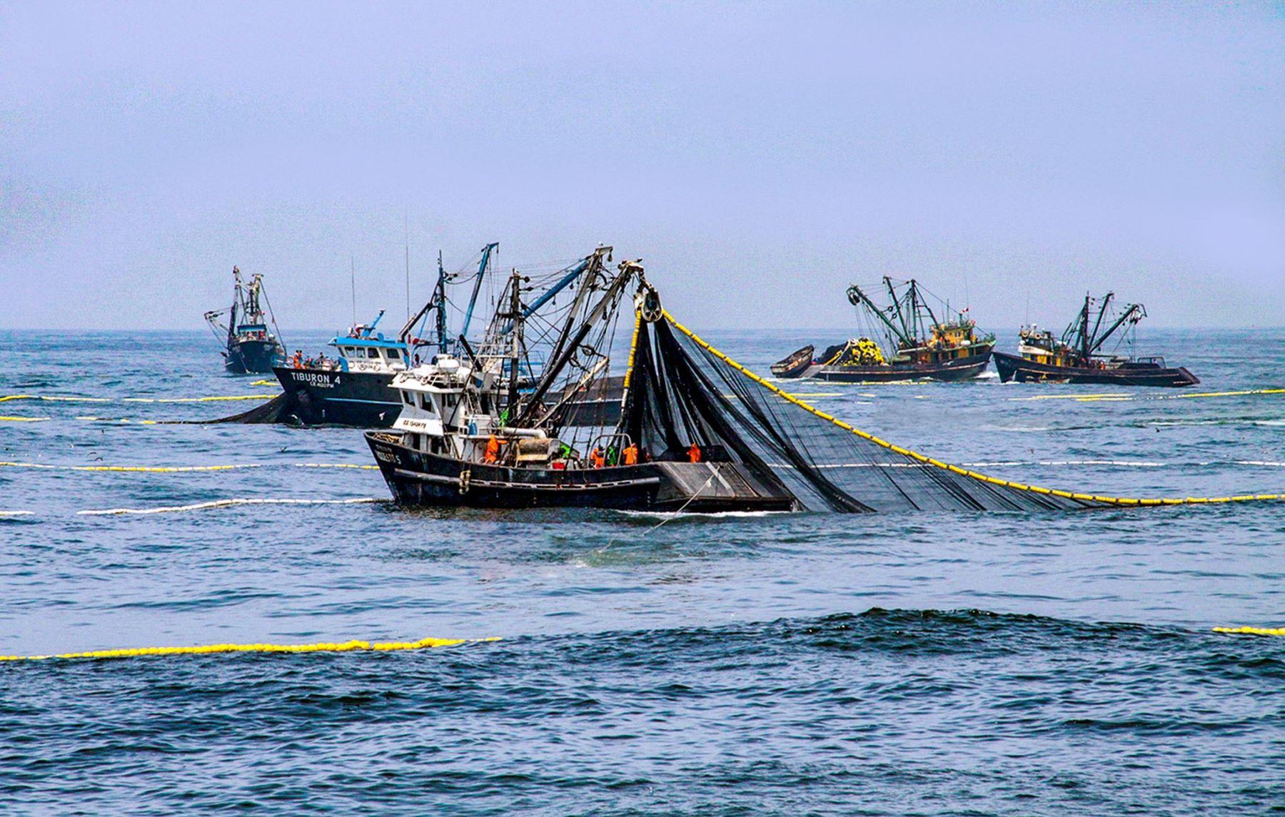 Pesca. Foto: ANDINA/Difusión.