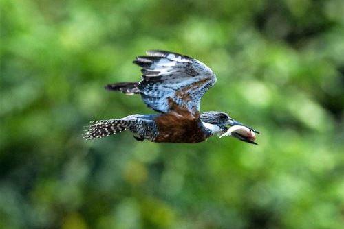 En el Perú se han registrado más de 1,870 especies de aves, siendo el segundo país en el orbe con mayor diversidad de avifauna. ANDINA/Difusión