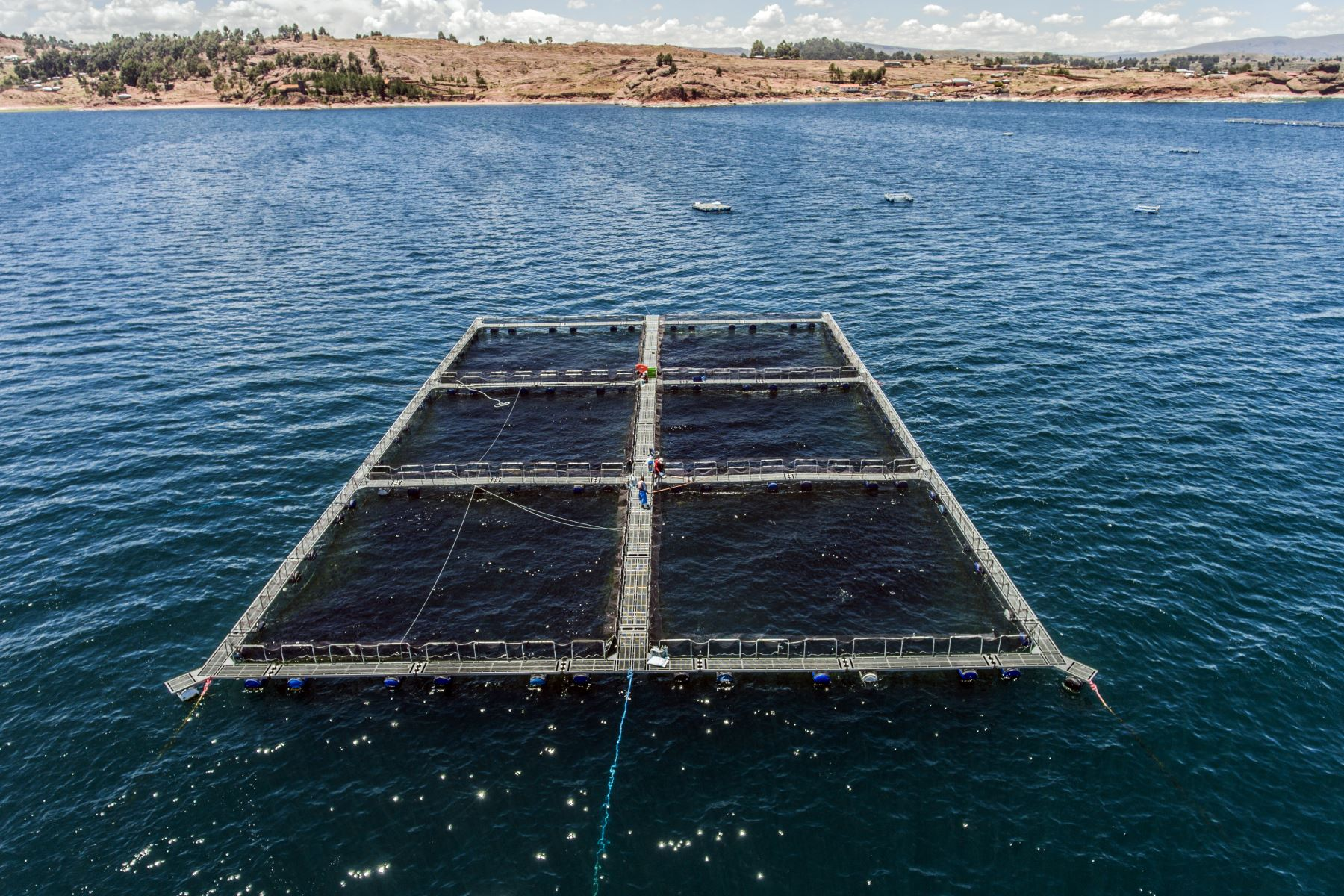 Mujeres de la comunidad del lago Arapa, en la región Puno, desarrollan con éxito la acuicultura sostenible y ganan el tercer lugar en el concurso organizado por la International Association for Women in the Seafood Industry.Foto:ANDINA/PNIPA