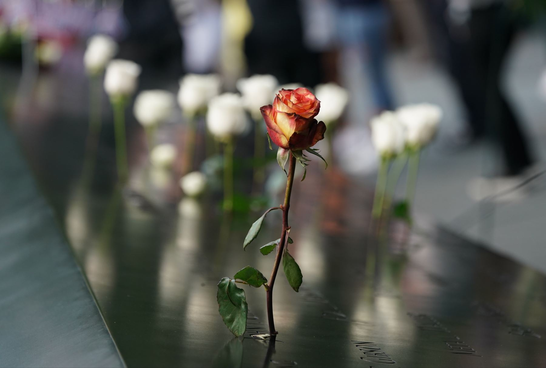 La gente deja flores durante la Ceremonia de Conmemoración del 11 de septiembre en el 9/11 Memorial en el World Trade Center en Nueva York. Foto: AFP