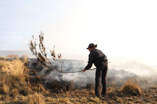 El incendio forestal que se registró en el cerro Quisapata, a la altura del kilómetro 6+200 de la carretera Jatumpata - Quisapata, sector de Condado, distrito y provincia de Abancay, región Apurímac, destruyó 5 hectáreas de cobertura natural, informó el Instituto Nacional de Defensa Civil (Indeci).ANDINA