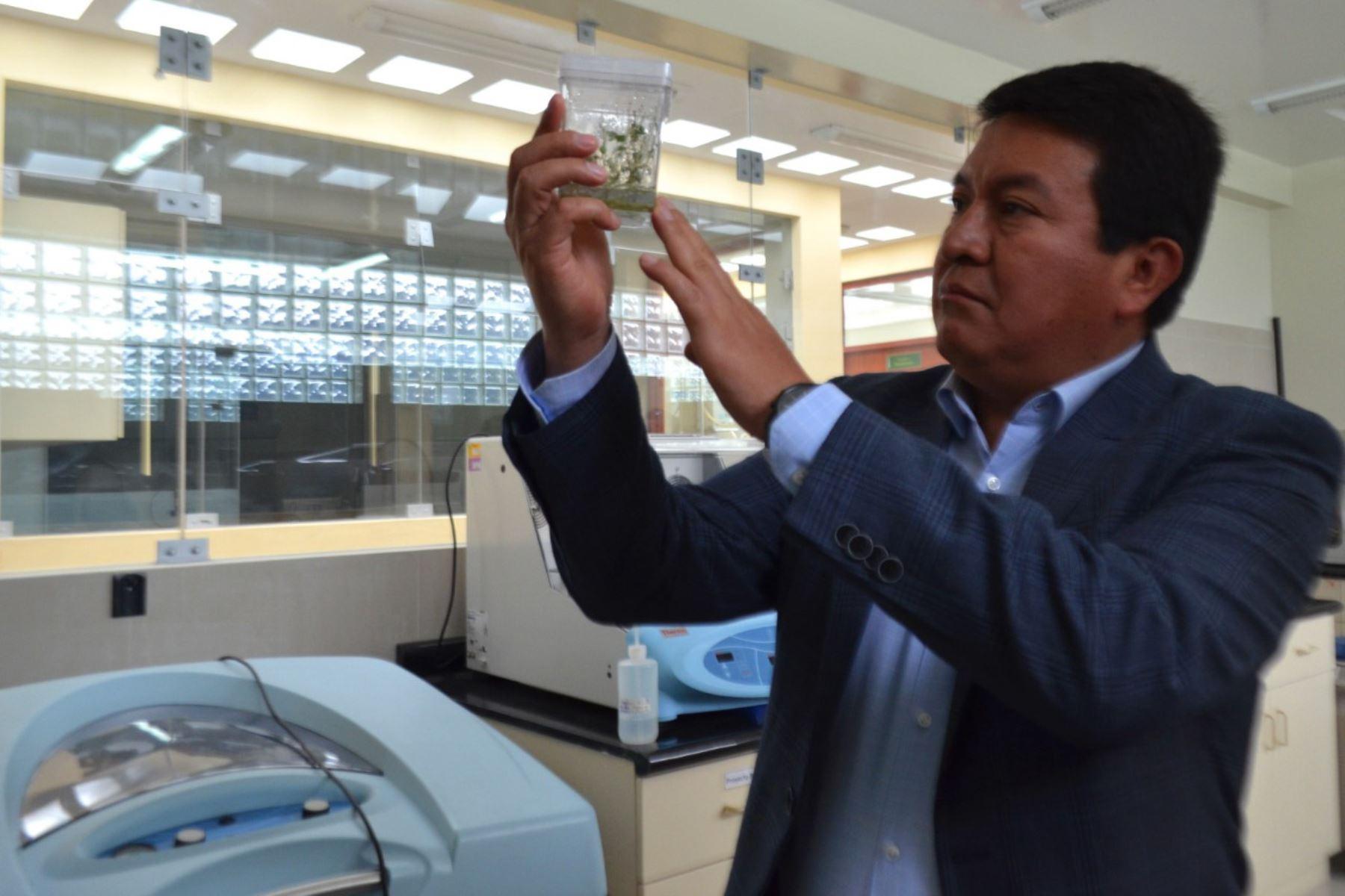 INIA apuesta por la investigación para mejorar calidad agrícola y ganadera, afirma su titular, Jorge Maicelo Quintana.