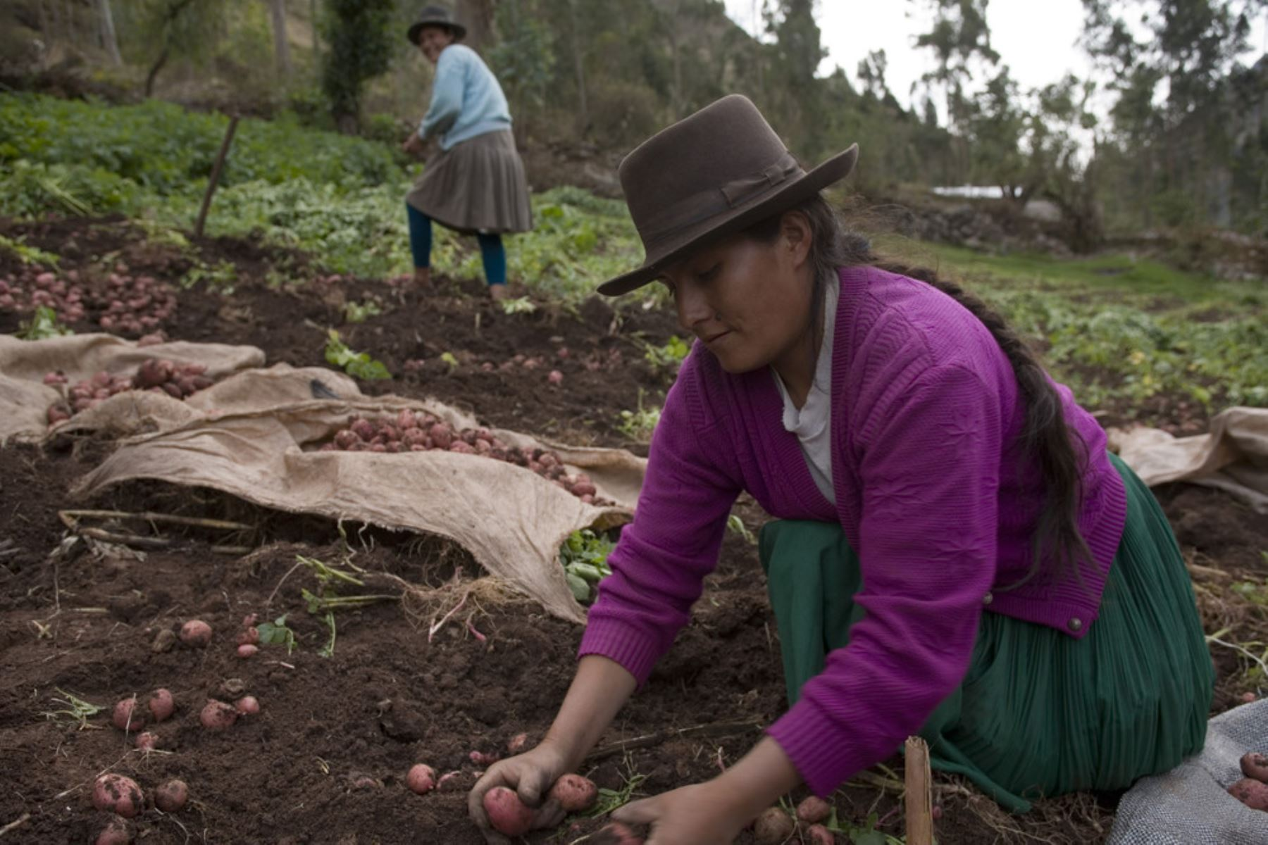 Foto: Productora agraria en zona rural.