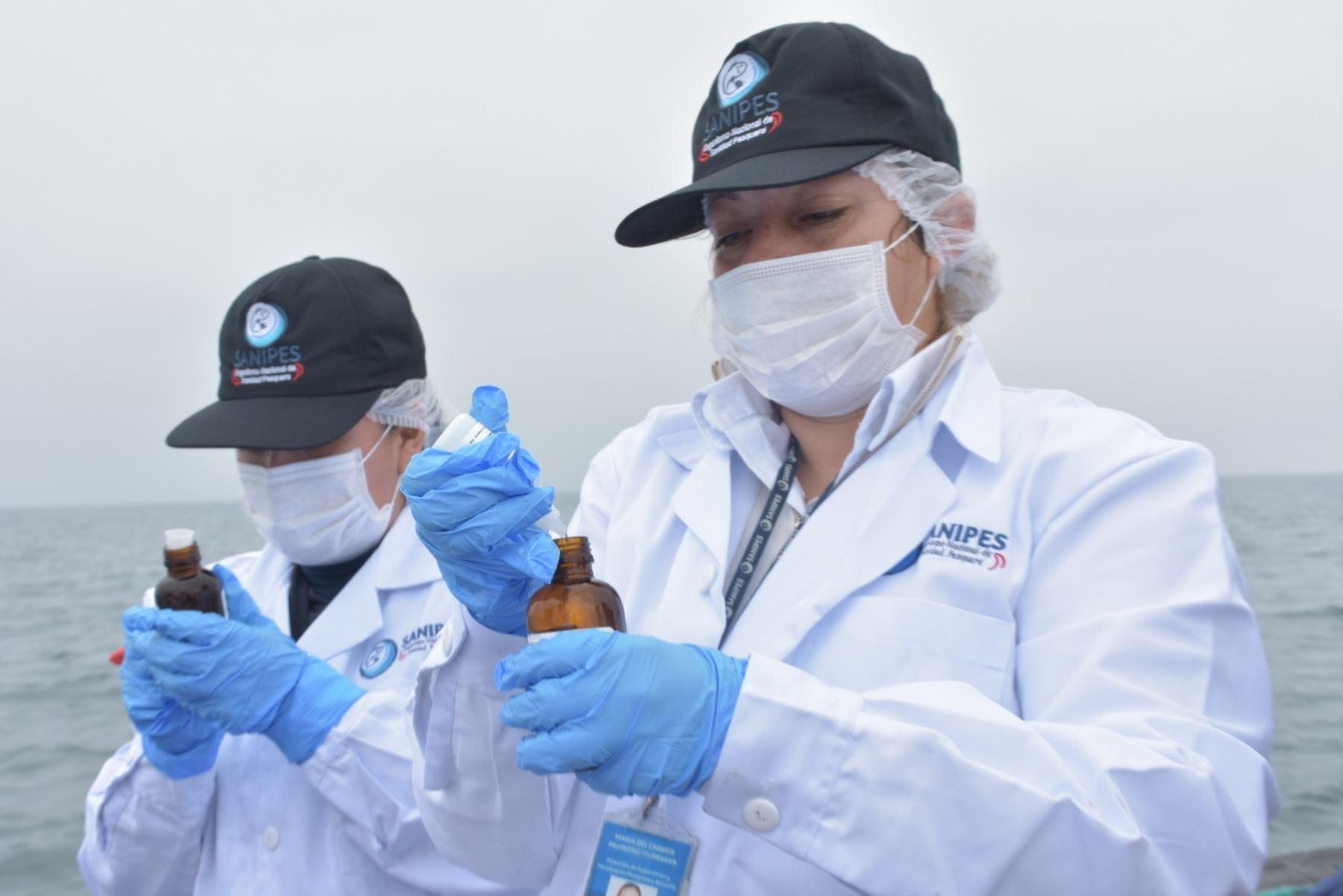 Sanipes confirma ausencia de virus de hepatitis en conchas de abanico en El Frontón. Foto: ANDINA/Difusión.