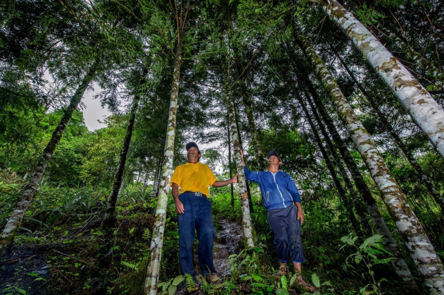 La región Cajamarca celebra la creación de su primera Área de Conservación Regional (ACR) denominada Bosques El Chaupe, Cunía y Chinchiquilla, ubicada en la provincia de San Ignacio. Foto: Michell León/Sernanp