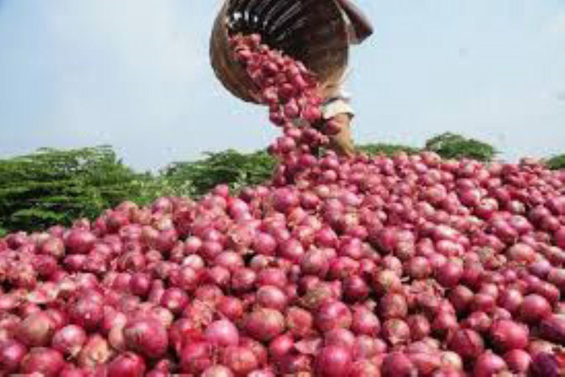 La cebolla es la hortaliza más consumida en el Perú
