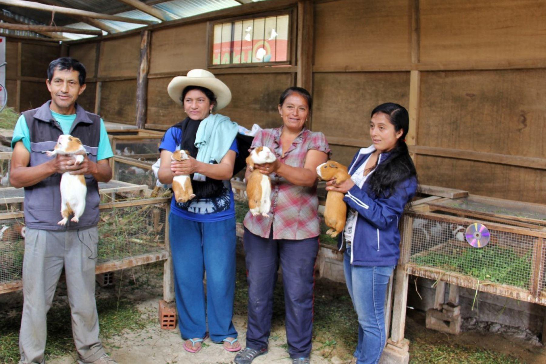 Familias rurales emprenden negocios de crianza de cuy con asistencia técnica y financiamiento del proyecto Haku Wiñay del Foncodes