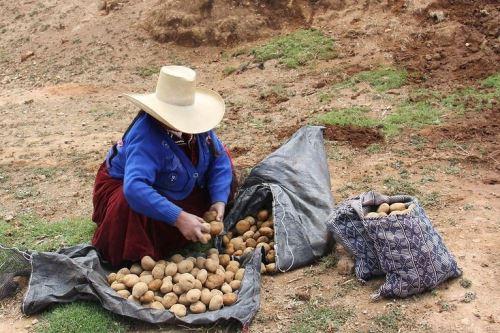 Poblaciones rurales tienen mayor riesgo de volver a la pobreza, sostuvo el Ministerio de Desarrollo e Inclusión Social (Midis).