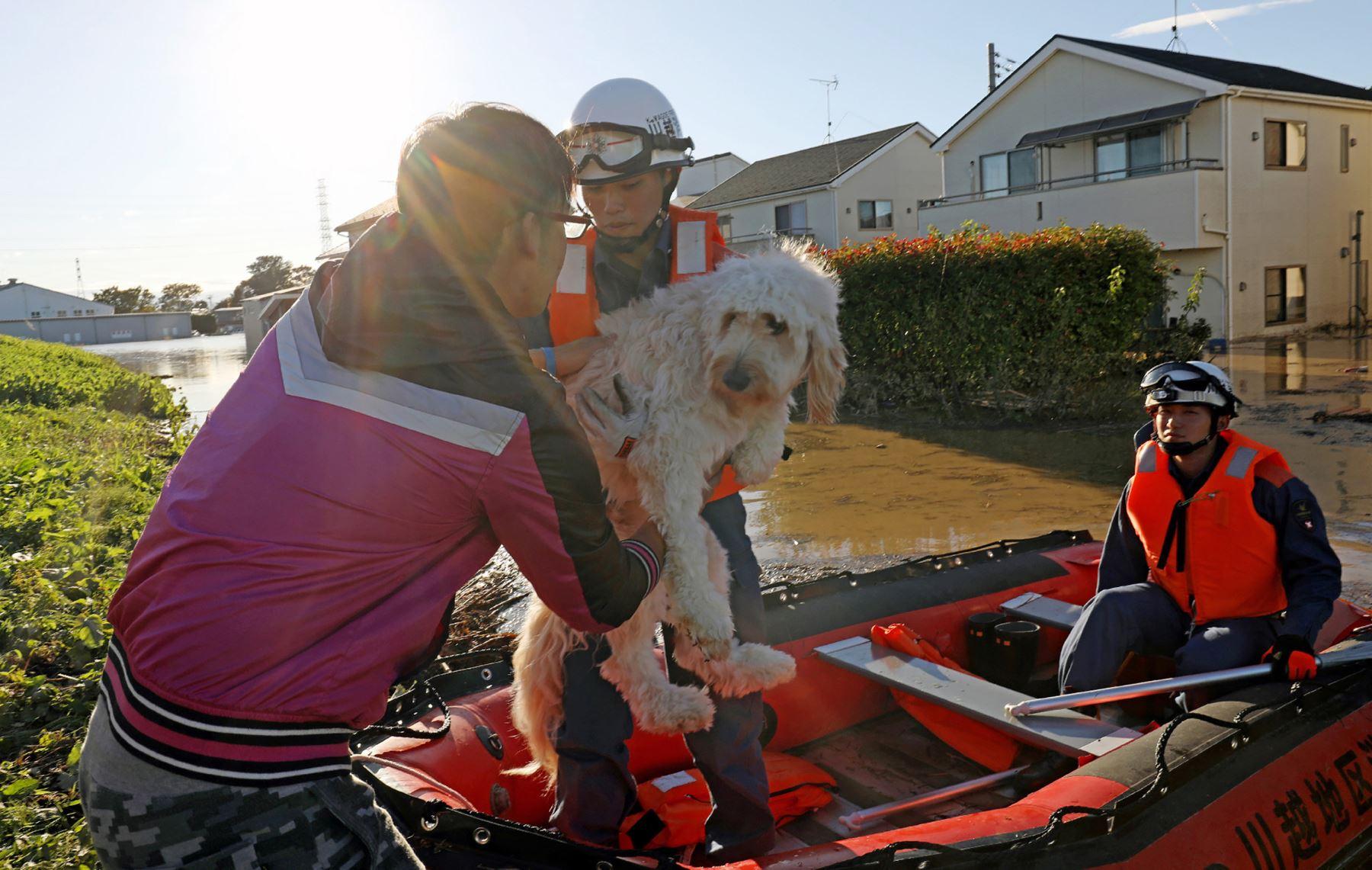 Bomberos evacuan a un perro de una zona inundada en Kawagoe, prefectura de Saitama, un día después de que el tifón Hagibis barriera el centro y este de Japón. Foto: AFP