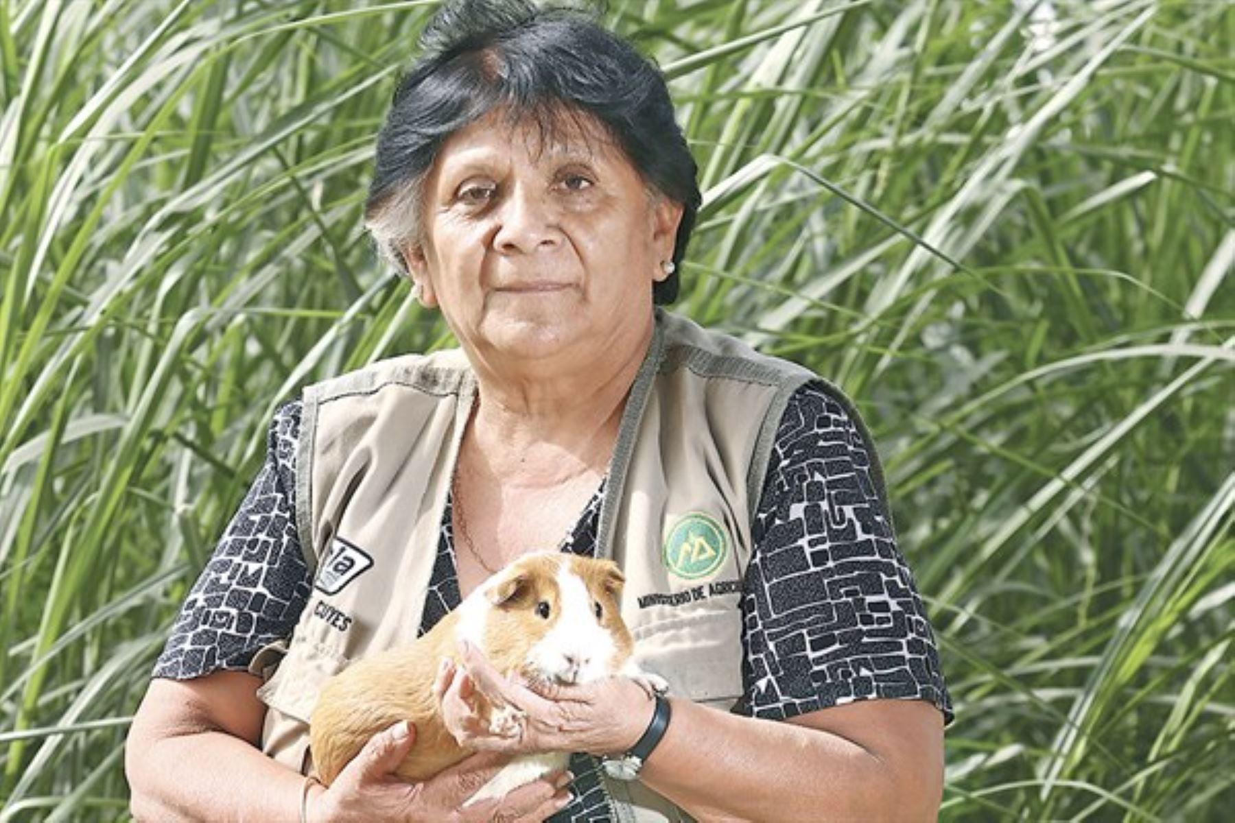 Destacada investigadora del ministerio de Agricultura, Lilian Chauca Francia, estudia sobre mejoras en la productividad y genética del Cuy desde hace 50 años.