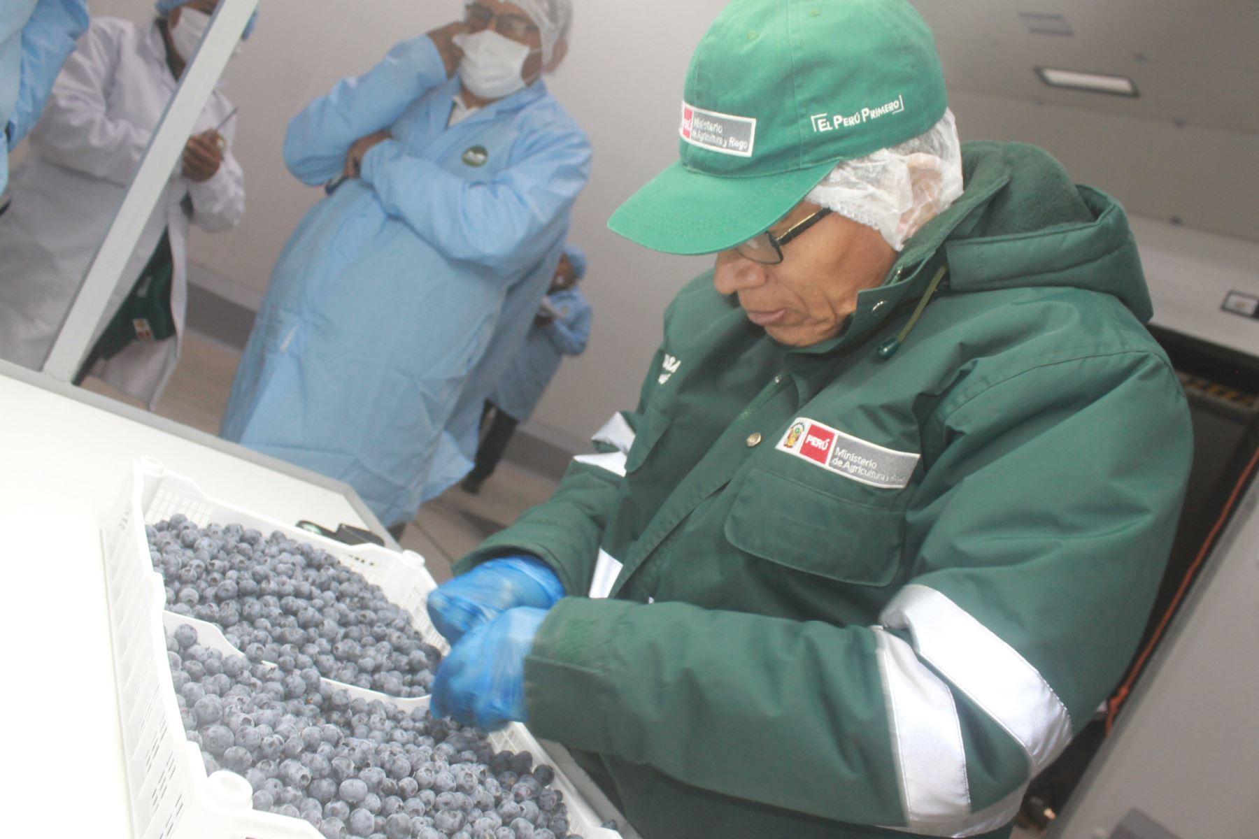 Estados Unidos saboreará los arándanos producidos en la provincia de Mariscal Nieto, región Moquegua,