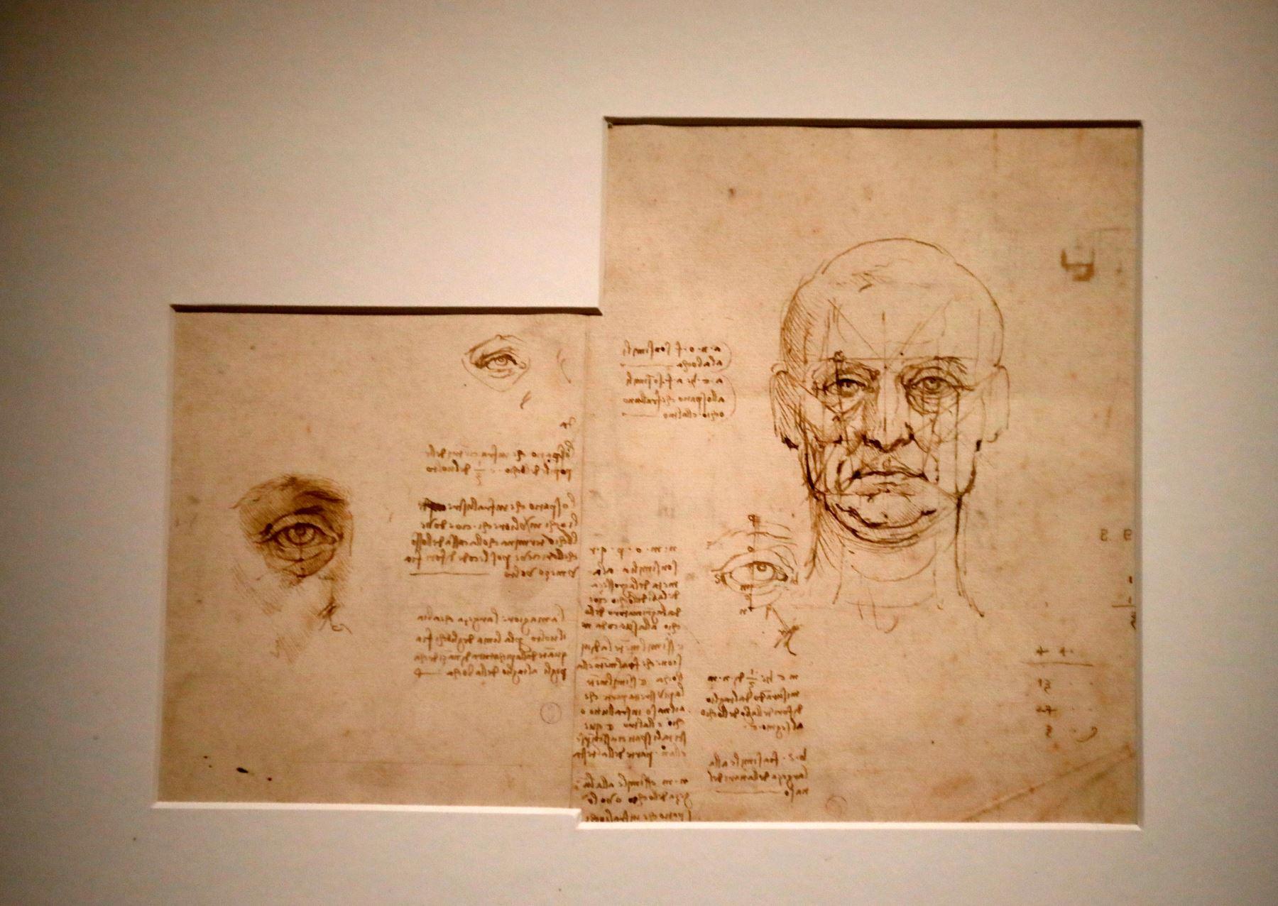 """Dibujo de """"Proporciones de la cara y los ojos"""" de Leonardo da Vinci. Foto: AFP"""