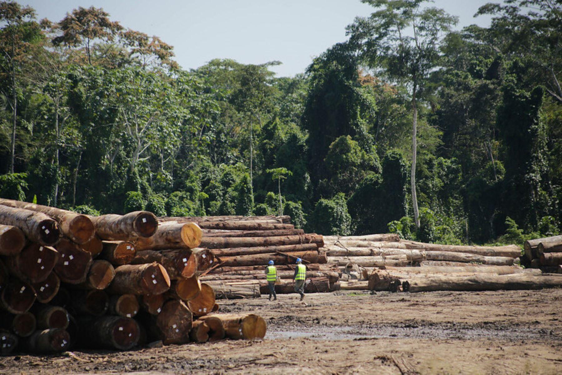 Serfor oficializa el mecanismo que establece la ruta de la madera legal desde su extracción hasta su comercialización. ANDINA/Difusión