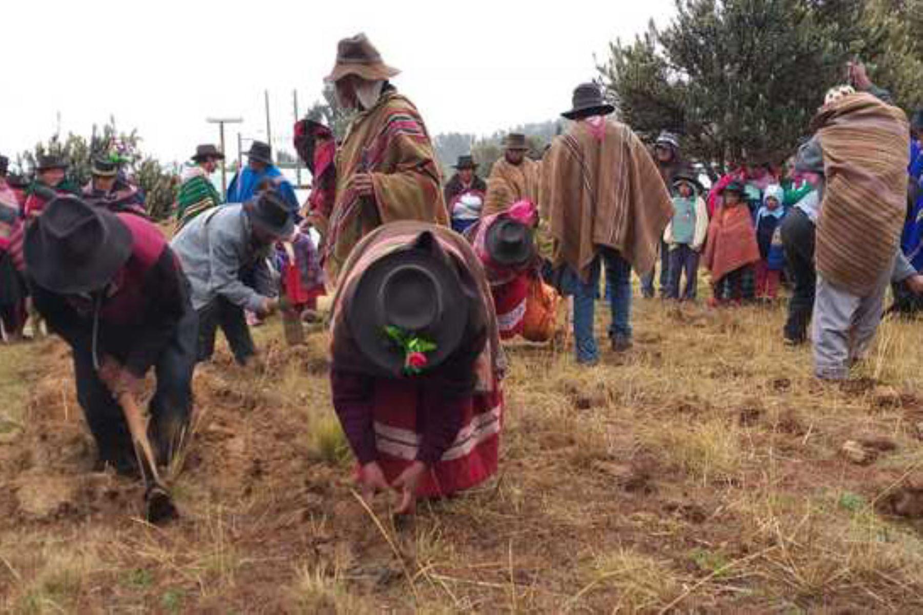 Ministerio del Ambiente impulsa la recuperación de variedades de papas nativas en comunidades de Apurímac y Huancavelica. ANDINA/Difusión