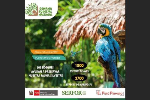 Perú celebra Semana Forestal Nacional.