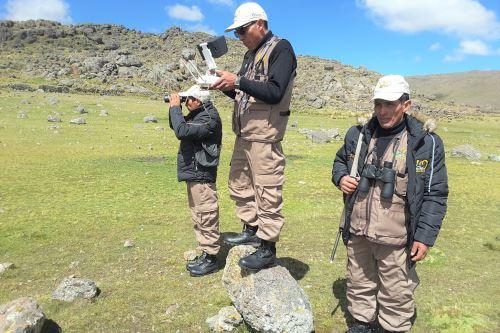 Ayacucho utiliza drones para combatir la caza furtiva de vicuñas. ANDINA/Difusión