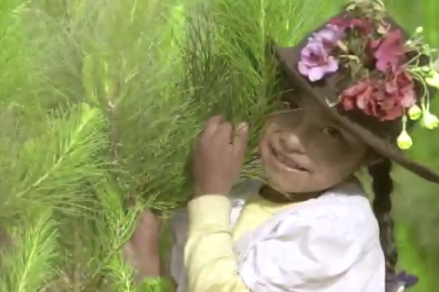 Este viernes 22, se sembrará un millón de árboles en las siete provincias de la región Apurímac, como una contribución con el planeta. Foto: Captura de video