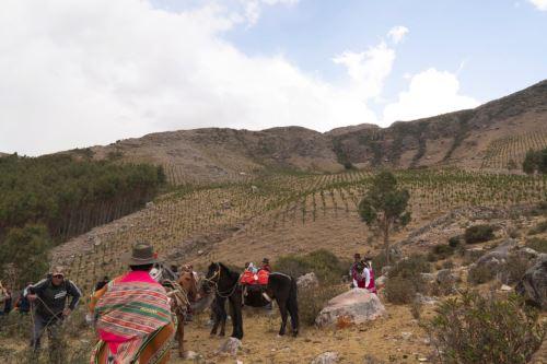 Este viernes 22, se sembrará un millón de árboles en las siete provincias de la región Apurímac, como una contribución con el planeta.