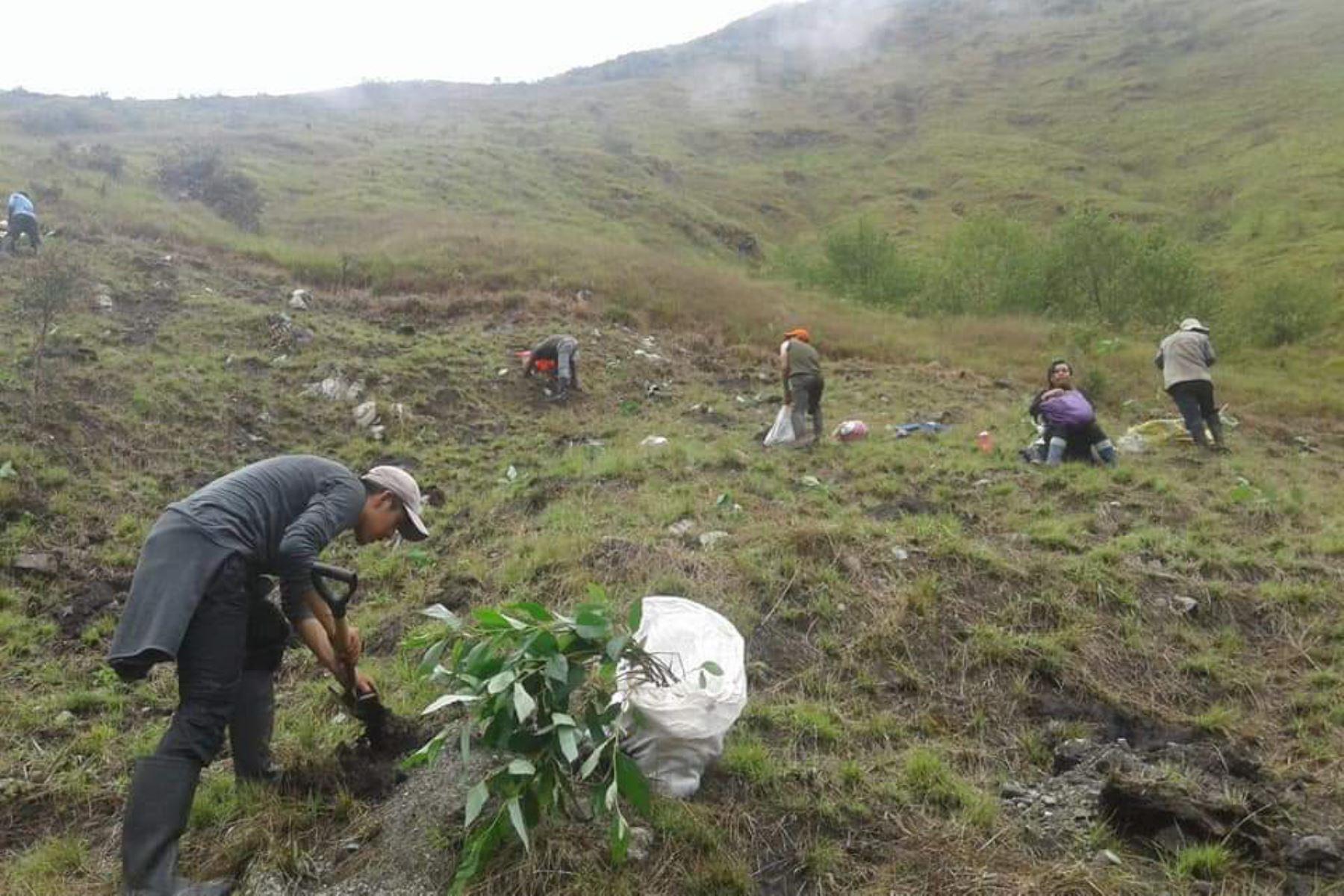 Reforestarán el santuario histórico Machu Picchu con un millón de árboles nativos.