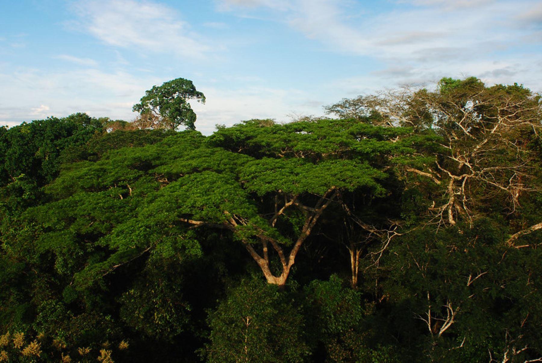 Firman convenio para promover investigación que detectará especies de flora y fauna en peligro de extinción en la Amazonía peruana. ANDINA/Difusión