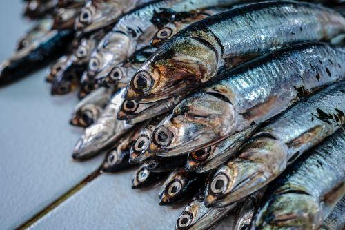 Conoce cómo los científicos del Imarpe determinaron el potencial de la anchoveta en el mar de Perú