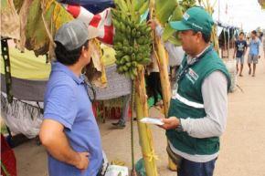 El ingreso y establecimiento de esta plaga en el Perú ocasionaría impactos económicos en la producción de 30,000 hectáreas de banano, que en su mayoría tienen certificación orgánica para la agroexportación.