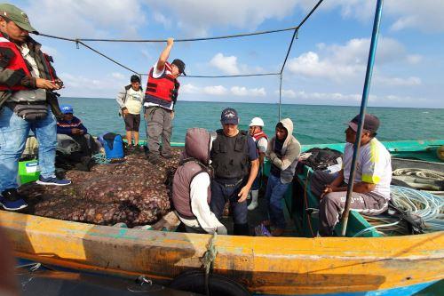 Recuperan más de 12 toneladas de pulpo y concha de abanico extraídos de forma ilegal de área natural protegida.