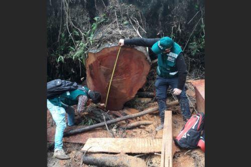 Autoridades deecomisan madera a informales que operaban en área protegida de Cajamarca. ANDINA/Difusión