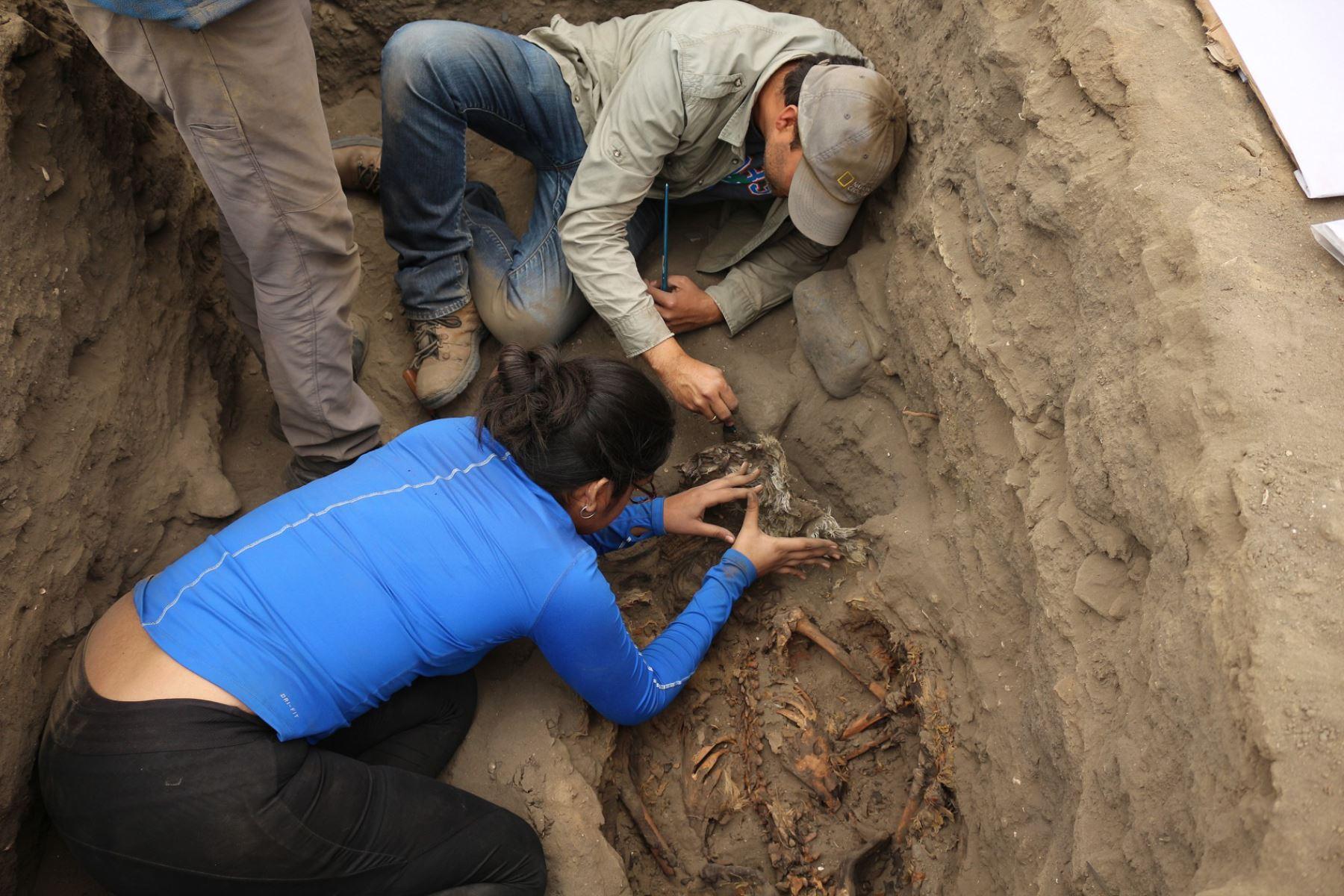 Un equipo de jóvenes arqueólogos peruanos participaron en el hallazgo del sacrificio y entierro masivo de niños de la cultura Chimú.
