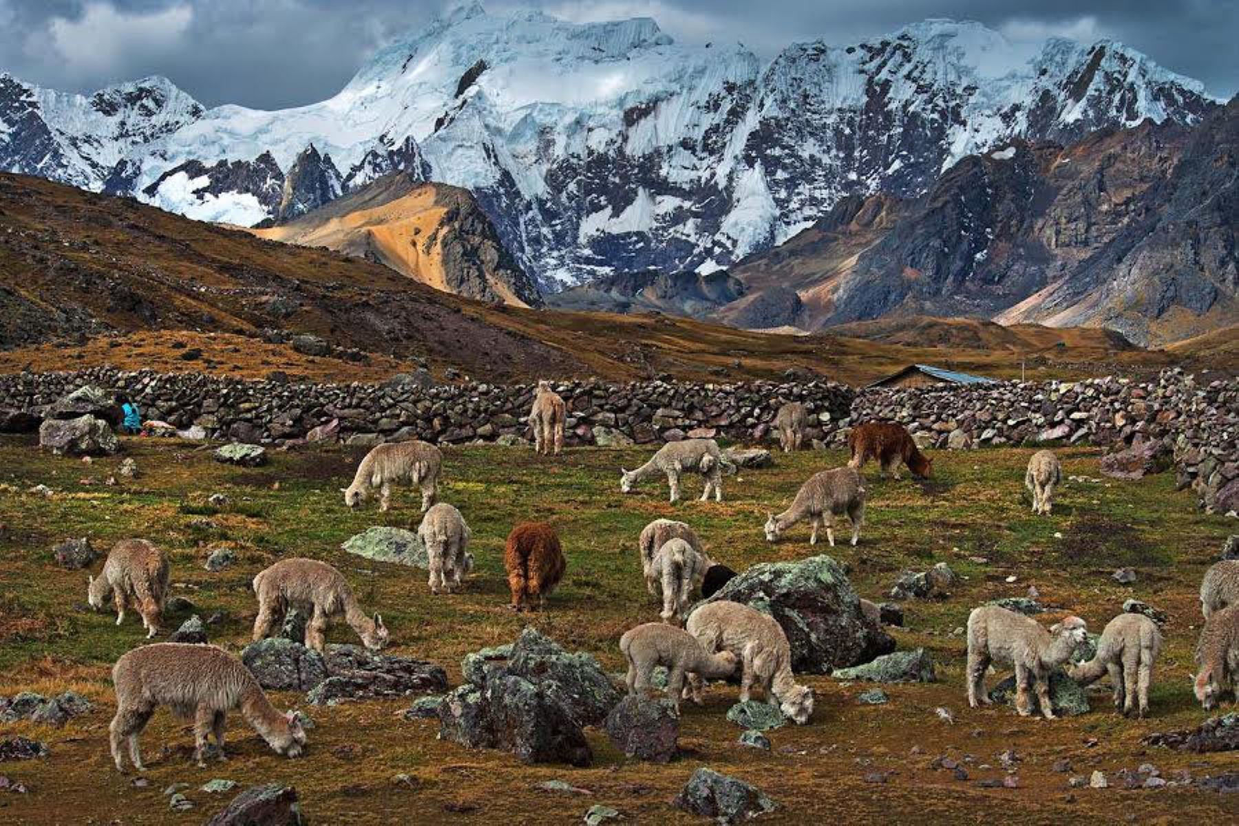 Cusco sembrará 7 millones de especies nativas en Área de Conservación Ausangate. ANDINA/Difusión