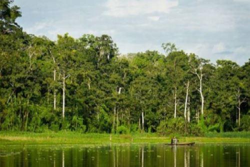 La conservación de los bosques amazónicos contribuyen a la reducción del impacto de las emisiones de dióxido de carbono, que representa el 80 % del total de gases de efecto invernadero en el planeta.  ANDINA/Difusión