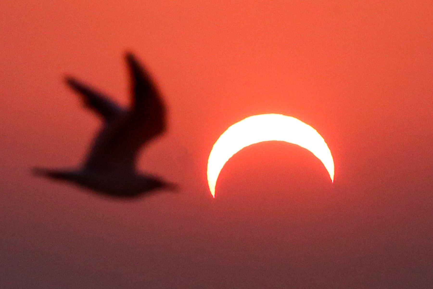 Una gaviota vuela o sobre una playa en la ciudad de Kuwait durante el eclipse solar parcial. Foto: AFP