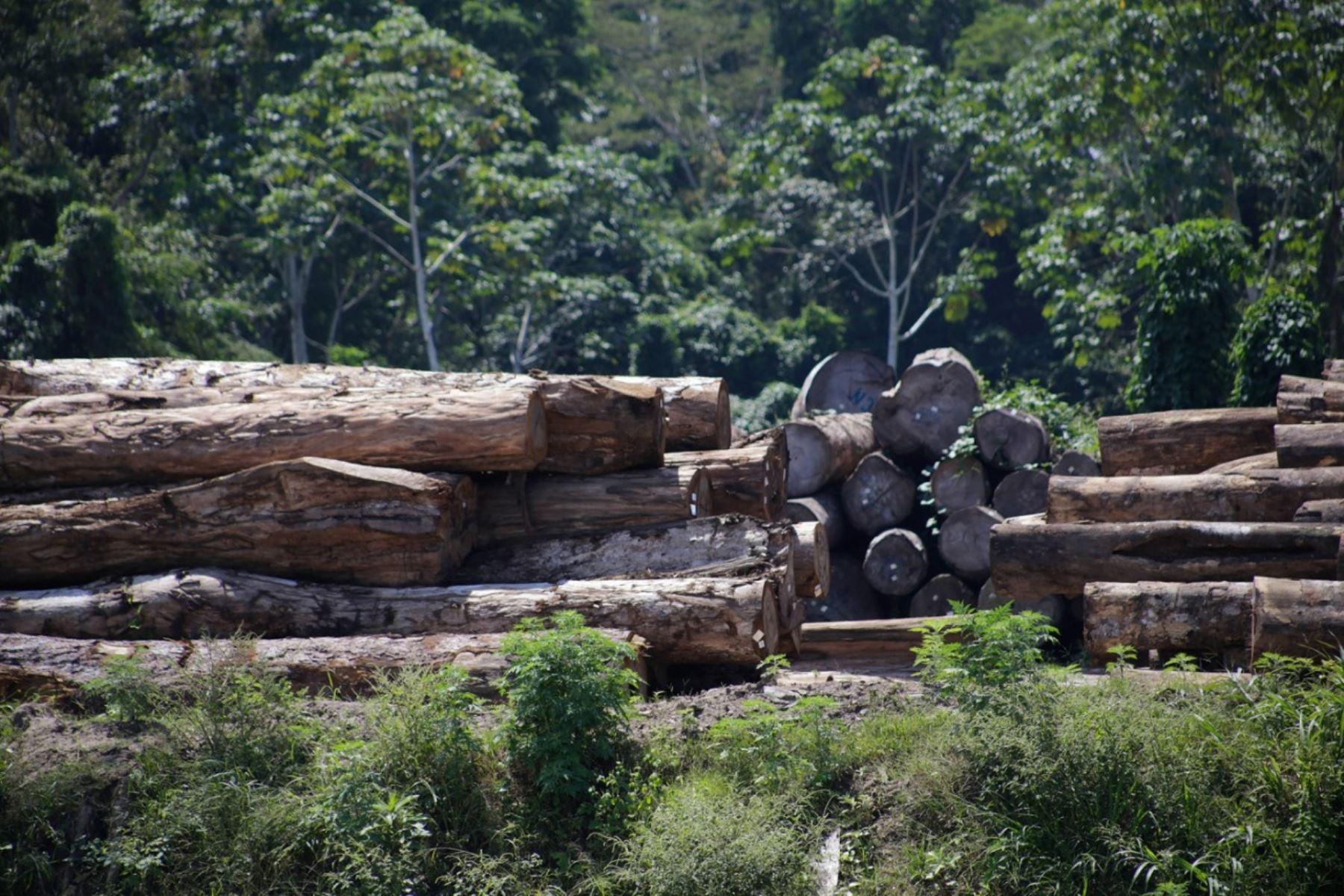 Los profesionales de la FEMA cumplen sus labores de investigación, fiscalización y vigilancia de los delitos ambientales, como por ejemplo la tala ilegal, minería ilegal, tráfico de vida silvestre, entre otros, que atentan contra los recursos naturales de todos los peruanos. ANDINA/Difusión