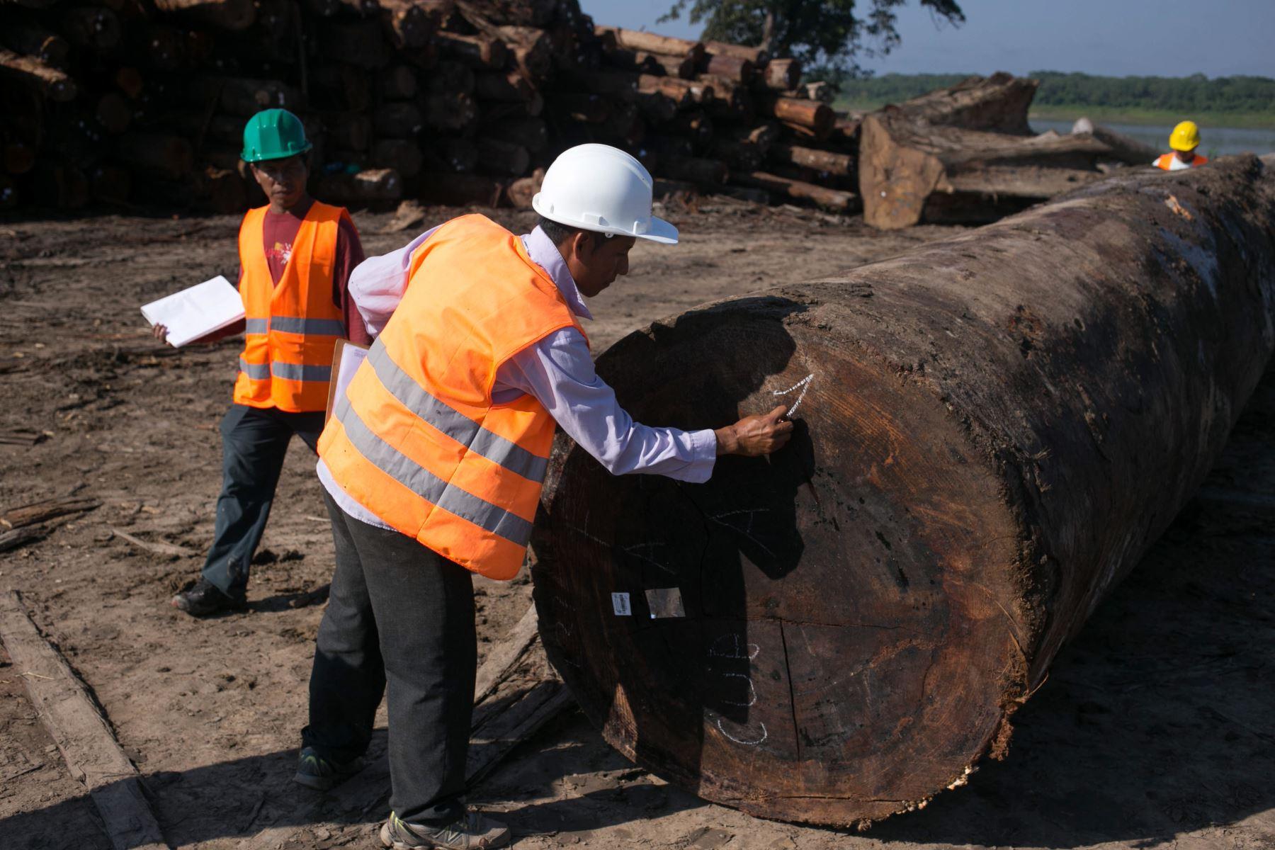 Personas naturales y jurídicas, así como comunidades indígenas deberán registrar en libros la madera que aprovechan, afirma el Serfor. ANDINA/Difusión