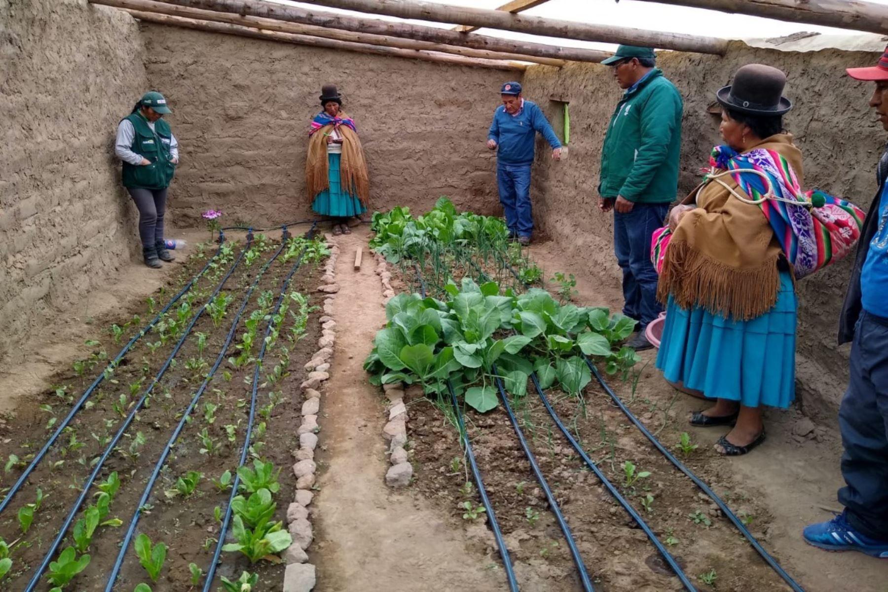 Agricultores de zonas altoandinas logran aumentar producción de alimentos gracias a la implementación de fitotoldos.