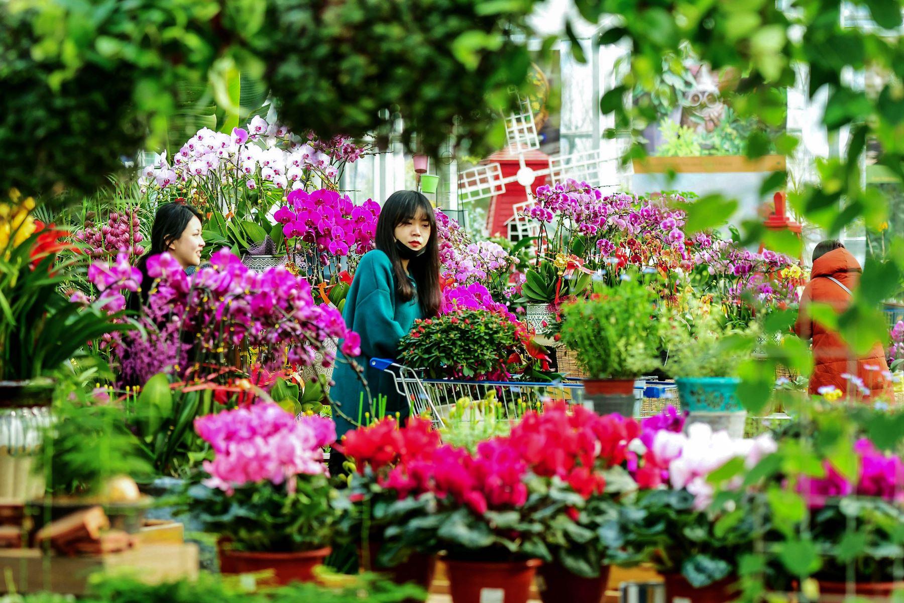 Un cliente compra flores en un mercado en Qingdao, en la provincia oriental china de Shandong, antes del Año Nuevo Lunar. Foto: AFP