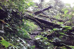 Sendero turístico en Santuario Pampa Hermosa cierra temporalmente