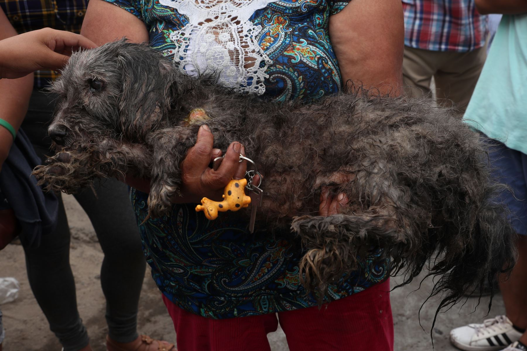 Varias mascotas resultaron con quemaduras tras la deflagración en Villa el Salvador.  Foto: ANDINA/Melina Mejía