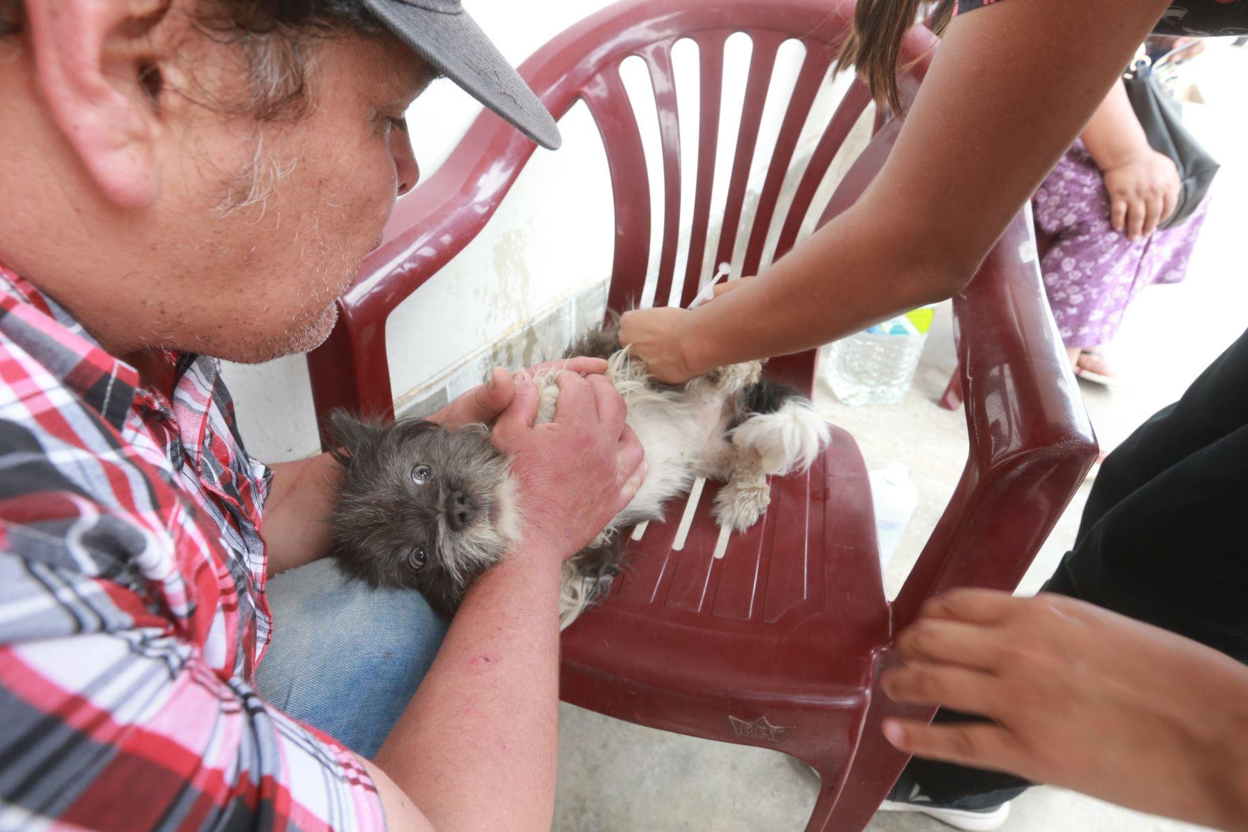 Veterinarios curan mascotas afectados por la deflagración e incendio  en Villa el Salvador. Foto: ANDINA/Jhony Laurente