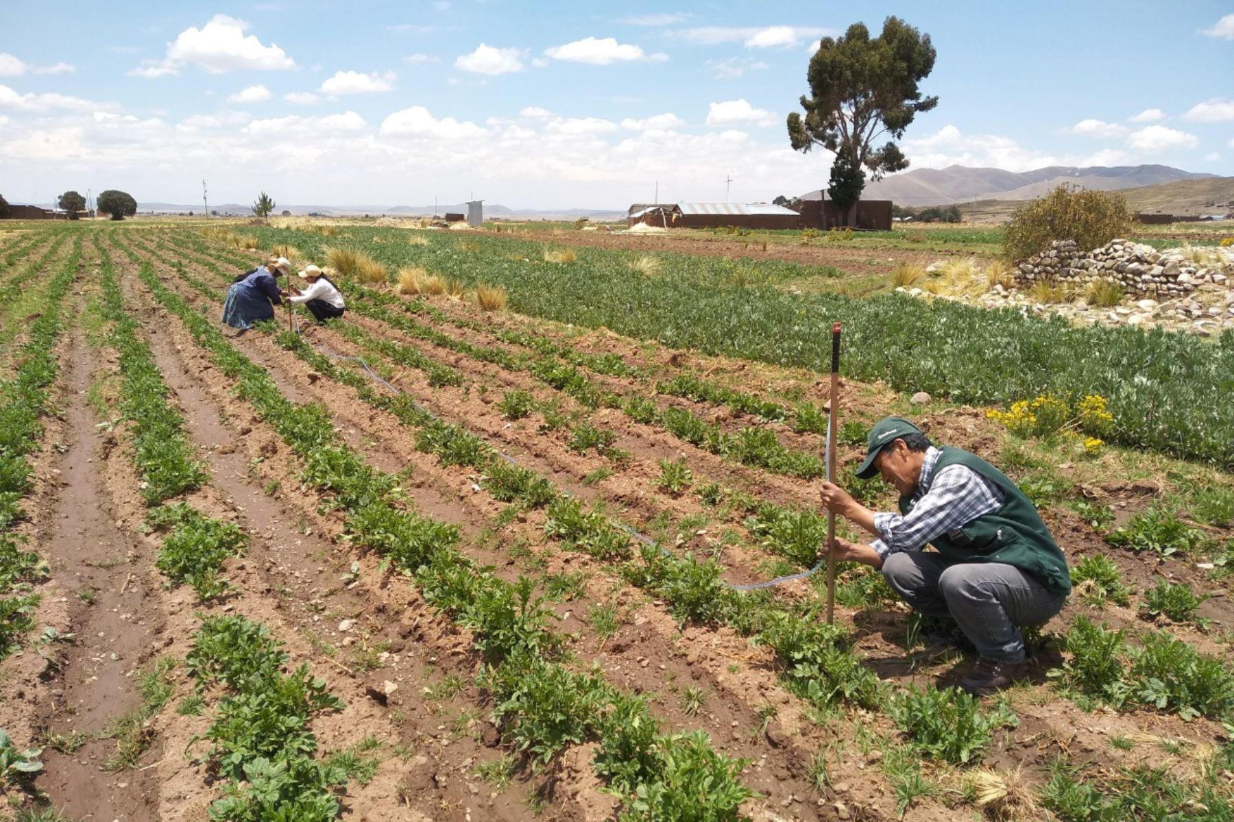Pese a la crisis sanitaria por el covid-19, la actividad agropecuaria se ha desarrollado con normalidad en las ocho provincias de la región Arequipa. Foto: ANDINA/Difusión